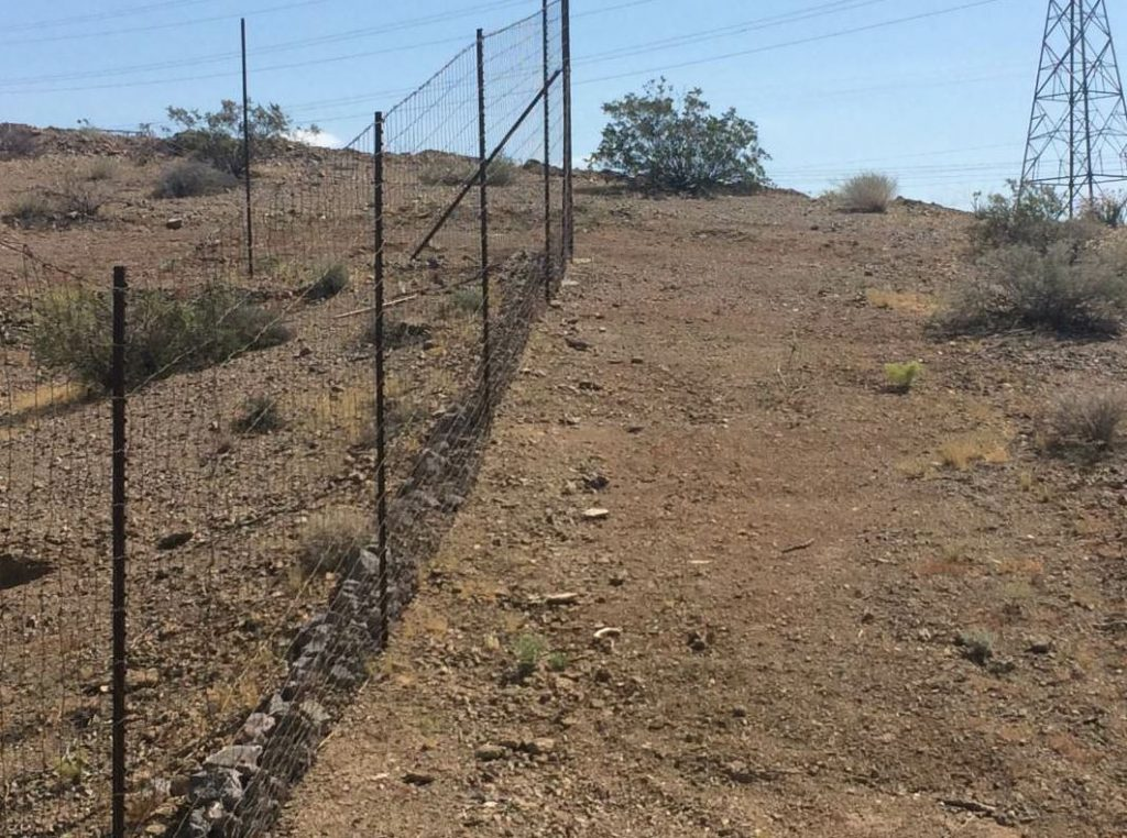 Eight-foot-tall wildlife fences prohibit animals, such as tortoises, kit foxes, coyotes and bighorn sheep, from entering the highway and causing vehicle-animal collisions.